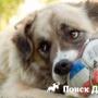 Как развеселить собаку?