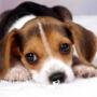 Собака скулит в одиночестве
