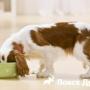 Что делать, если щенок не ест сухой корм?