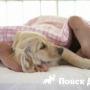 Почему собака спит в ногах?