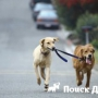 За выгул собаки без поводка в Чехии вводят штраф