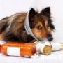 Почему собака хрипит