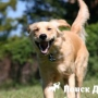 Скрип зубов у собак