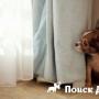 Собака боится людей