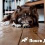Что делать, если собака худеет при хорошем аппетите?