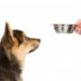 Можно ли собакам картошку?
