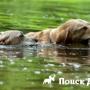 Почему собака боится воды