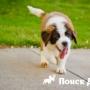 Собака высовывает язык, когда дышит