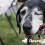 Как собака умирает от старости?