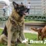 В Сочи пройдет всероссийская выставка собак