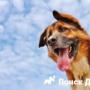 Собака тяжело дышит
