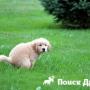 Как приучить собаку к улице?