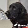 В Британии собаки поступили на медицинскую службу