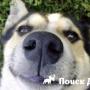Почему собака щурит глаза?