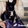 Собака Леди Гаги стала «лицом» Coach