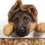 Как воспитать послушную собаку?