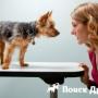 Взгляды собаки и человека схожи