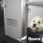 Собаки будут летать первым классом