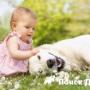 Собака может предотвратить астму у ребенка