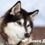Древние жители Заполярья селекционировали собак