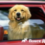 Профессиональная перевозка домашних животных