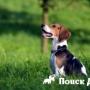 Как воспитать идеальную собаку?
