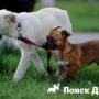 Как приучить собаку к щенку?