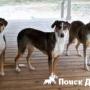 В Китае появится центр клонирования собак