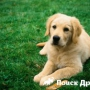 Какую собаку выбрать: кобеля или суку