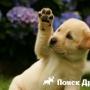 Собака может предотвратить нервное расстройство