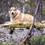 Как выбрать собаку для охоты?