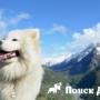 Отдых с собакой в Сочи