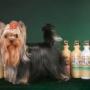 Можно ли собаку брызгать духами?