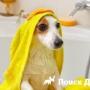 Почему собака дрожит?