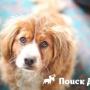 Собаки сознают собственное «я»
