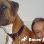 В Англии впервые клонировали собаку