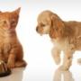 Как выбрать корм для собаки и кота?