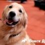 Лабрадор снова стал самой популярной собакой Америки