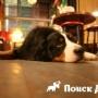 Собака поможет справиться с одиночеством