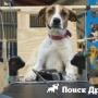 Бездомные собаки отправляются в полет