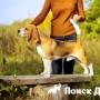 Китайские ученые создали собак-«качков»