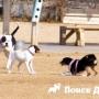 Столичных застройщиков обяжут оборудовать площадки для собак