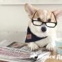 В Великобритании назвали собак-звезд Инстаграм