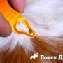 Собаки страдают от укусов пироплазменных клещей