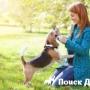 Сердца собак и их хозяев бьются в едином ритме