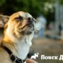 В России увеличились случаи заражения собак гельминтами