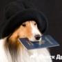 В России хотят ввести обязательную регистрацию собак