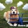 Собаки будут летать по старым тарифам