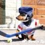 Такса Крузо играет в хоккей и готовит брускетту