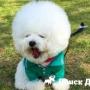 Собака-«облако» взорвала интернет